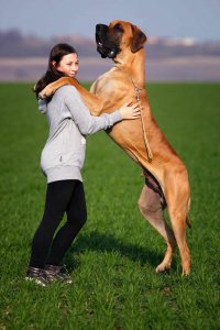 Lady standing with huge dog